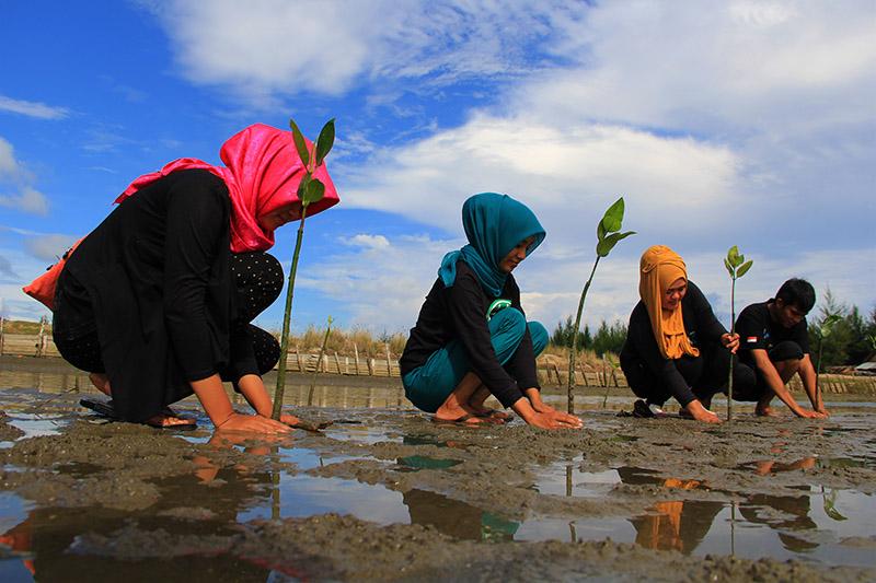 Peringati Hari Bumi, Mahasiswa Unsyiah Tanam Mangrove