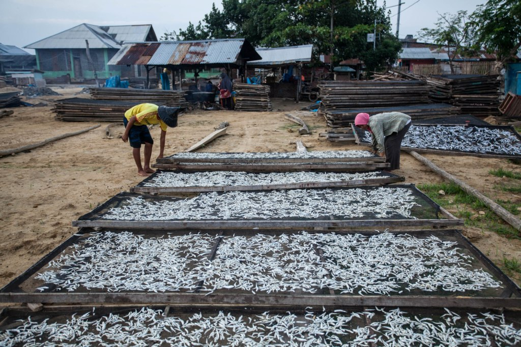 Produksi Teri Nelayan Pusong