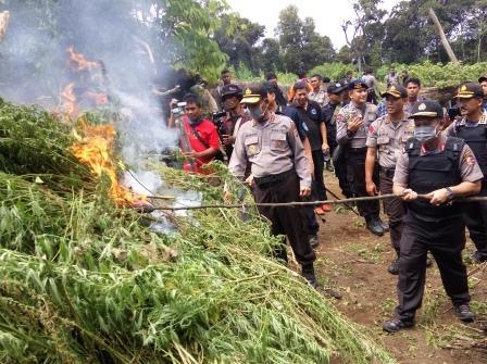 Sumberpost TV – Kapolri Pimpin Pemusnahan Ladang Ganja
