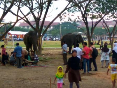 Gajah di Lapangan UIN Ar-Raniry Jadi Tontonan Warga