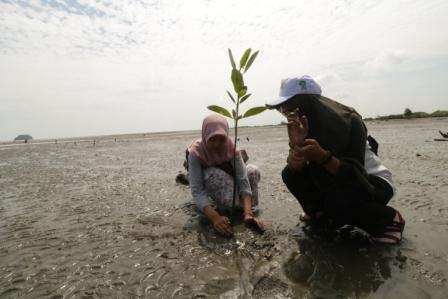 Mahasiswa Tanam 1.500 Mangrove