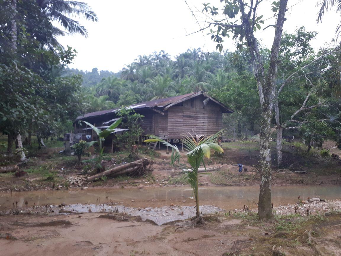 Perkebunan Kelapa Sawit Ilegal ditemukan di Tamiang Hulu